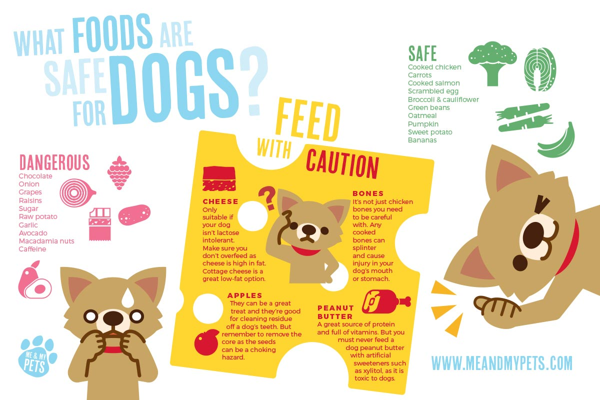 Dog food guide explaining which foods are safe