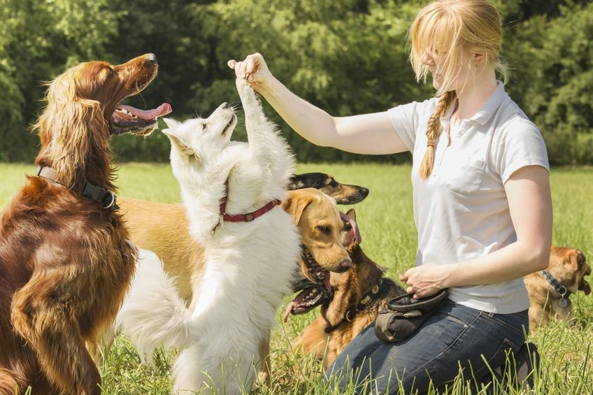 lots of dogs together in a park playing