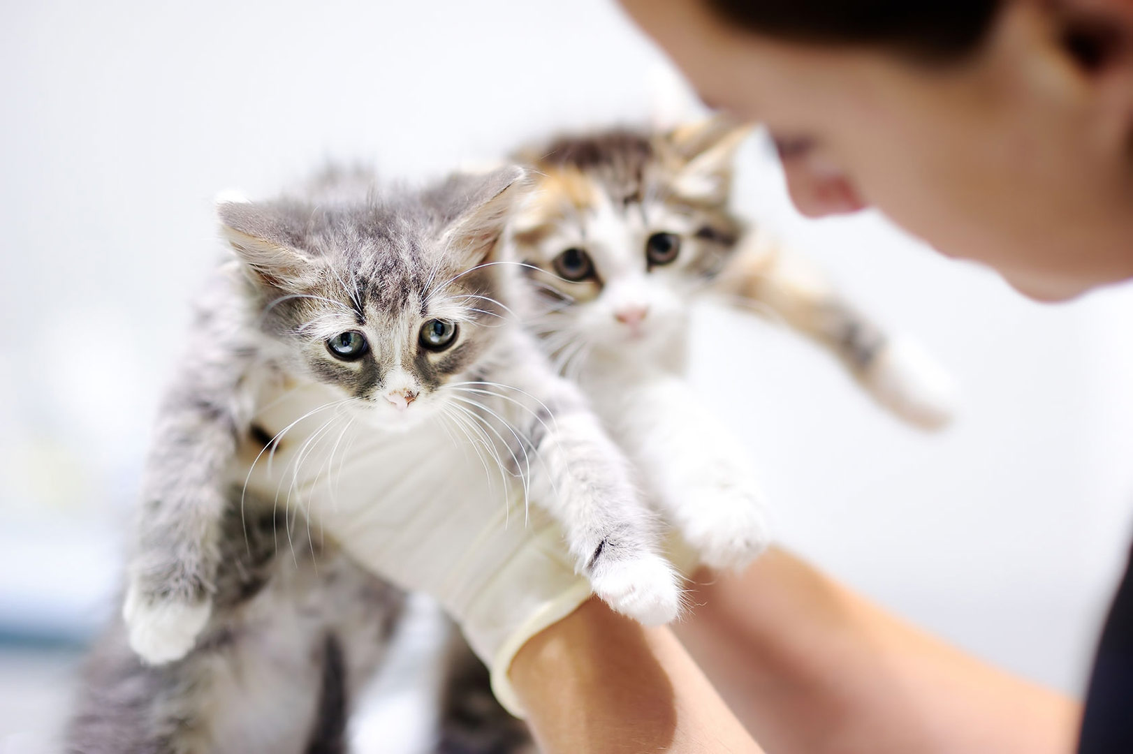 Kittens-At-The-Vets