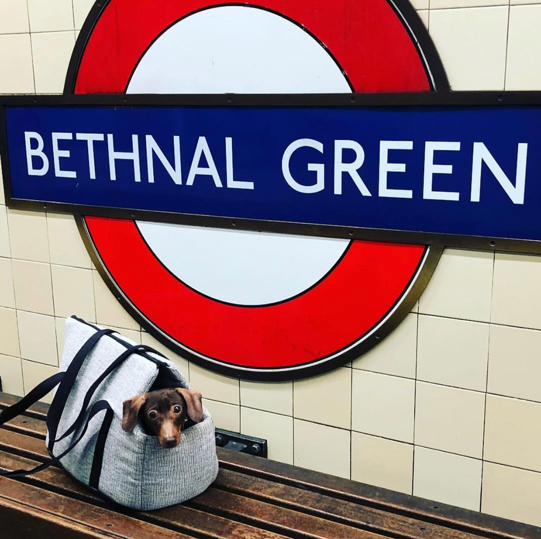 dachshund-london-underground-travel-carrier-bag
