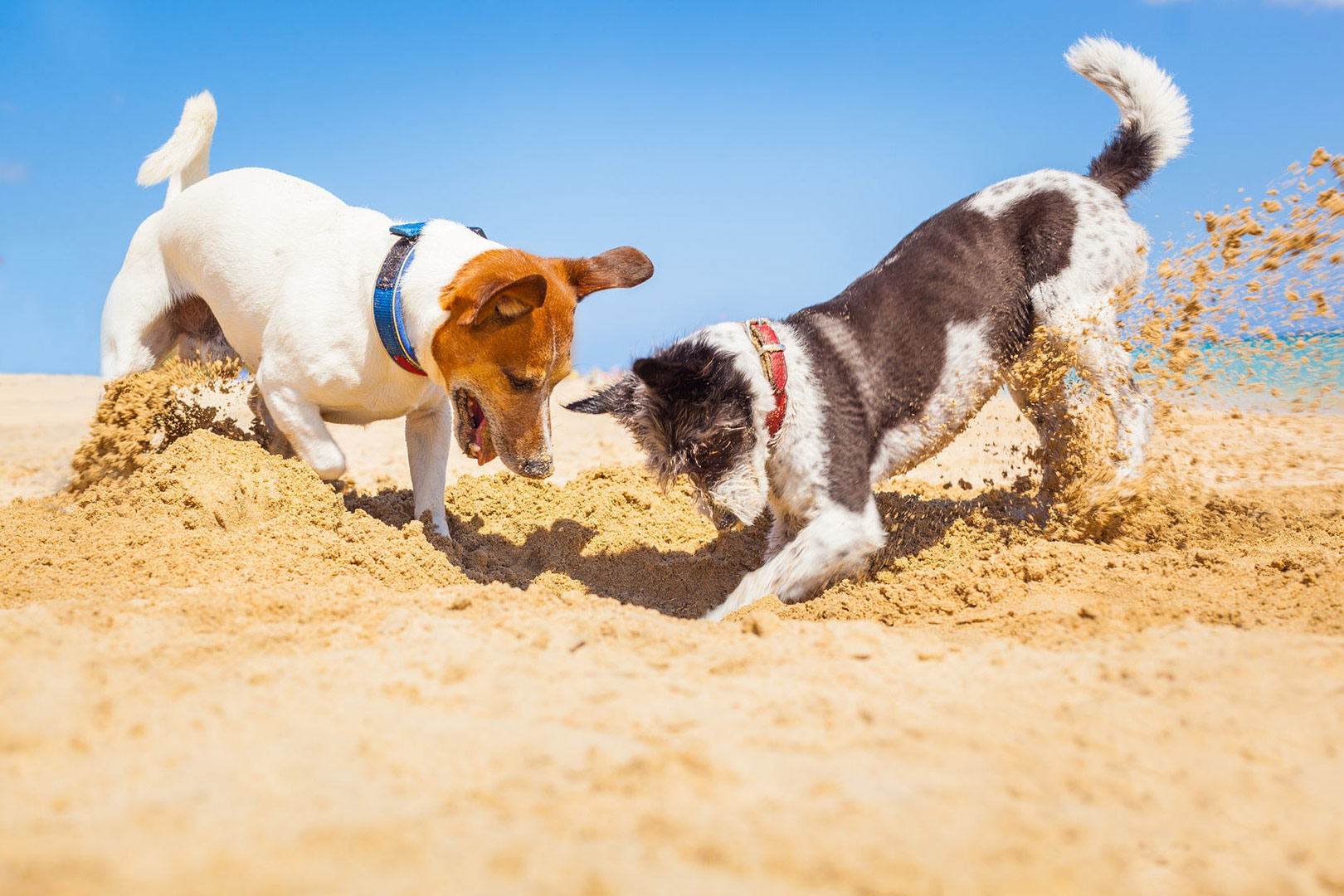 Me-My-Pets-blog-dog-friendly-easter-treats-picture-of-two-dogs-digging-in-the-sand