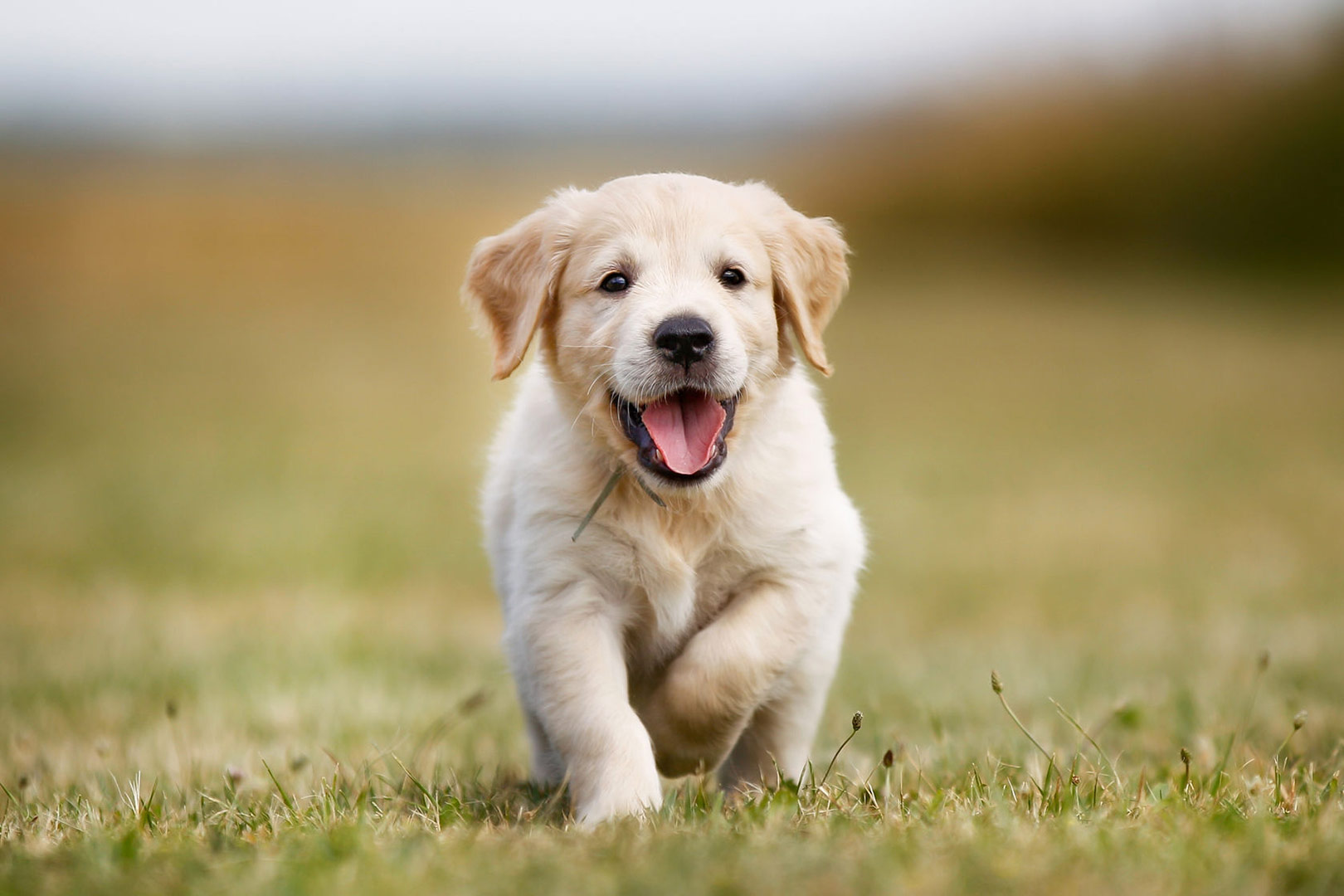 Me-My-Pets-blog-getting-a-puppy-picture-of-a-puppy-outside