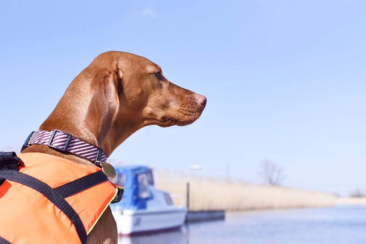 cute-red-dog-wearing-a-flourescent-orange-life-jacket-on-the-coast