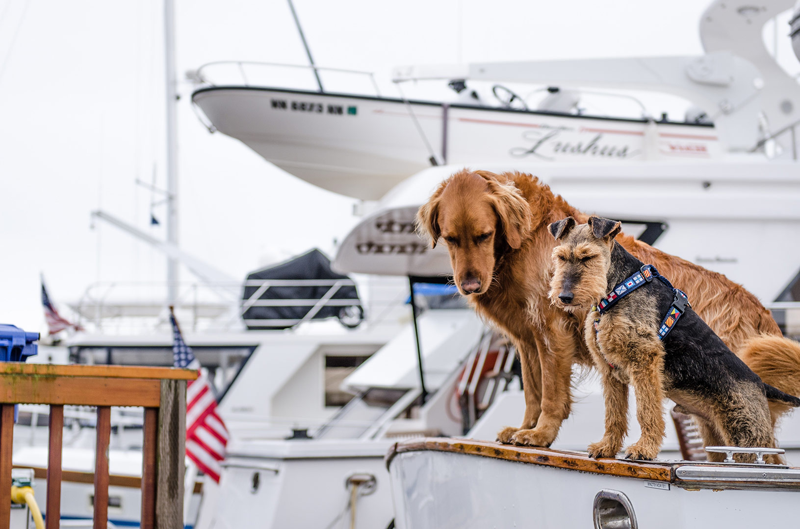 two-friendly-dogs-sitting-on-a-boat-looking-into-the-water
