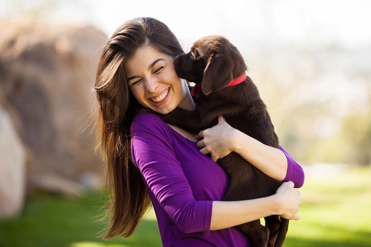 woman outside in the park with her chocolate labrador puppy who is giving her a lick on the cheek