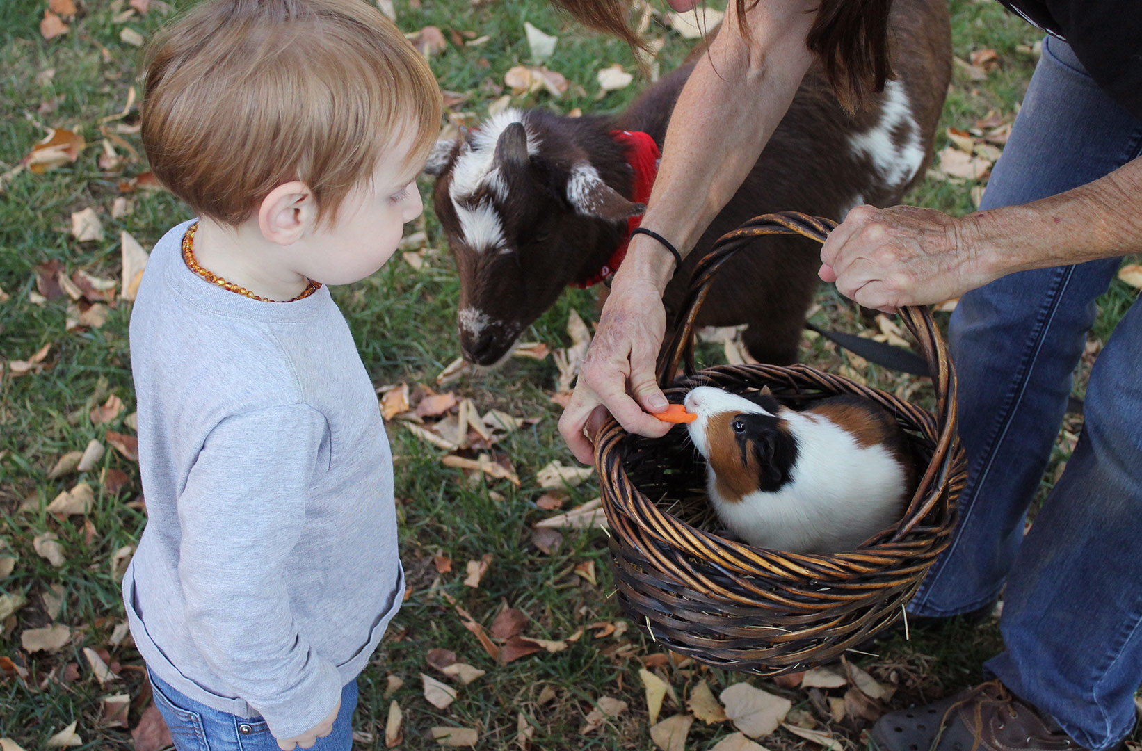 young boy petting a guinea pig in a basket held by his mother